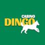 Casino Dingo Site